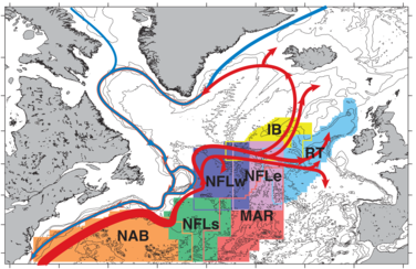 Major circulation branches of the North Atlantic Current